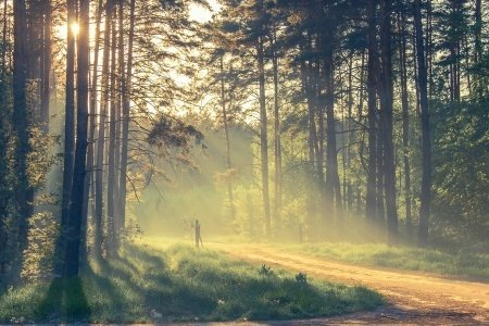 A Wise Retreat - Rehab for Men, Benefits of Forest Bathing – Shinrin-yoku